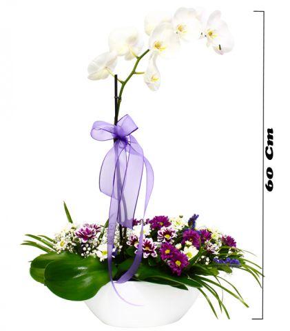 Kır Çiçekli Orkide